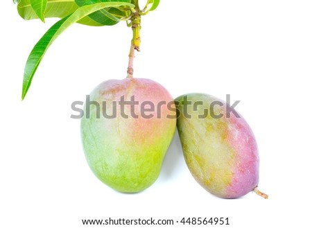 Delicious ripe mango with green leaf on white background, Fresh mango on the branch illustration, mango isolated on white background - stock photo