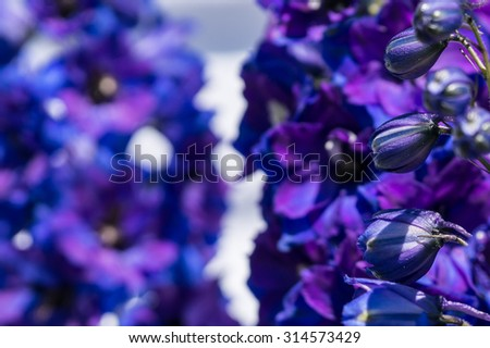 delphinium flowers. floral background
