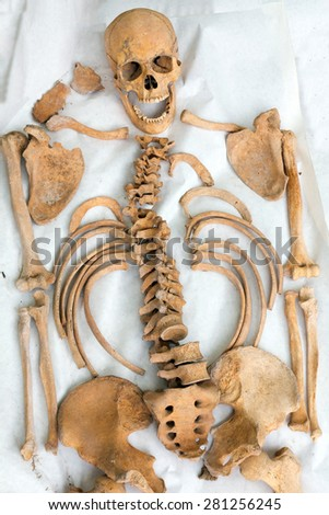 demonstration of archeological find old human skeleton on white - stock photo