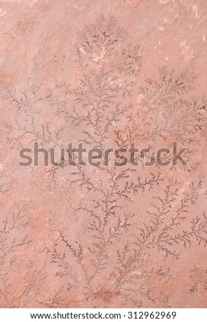 Dendritic Formation Spreading out on Sandstone  - stock photo
