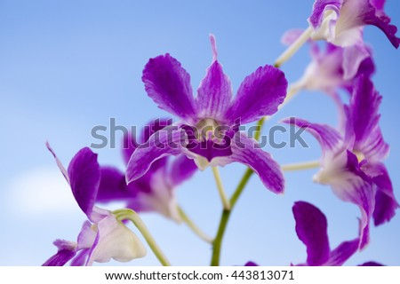 Dendrobium orchid in bloom against blue sky - stock photo