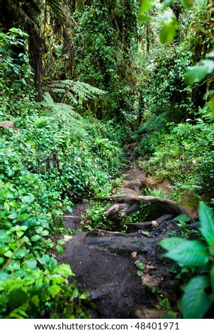Dense and lush vegetation and trees of Tanzania's Rain Forest - stock photo