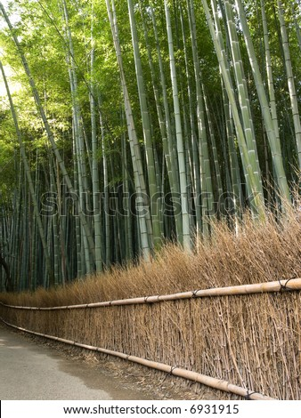 Dense bamboo grove behind a grass fence in Arashiyama in Kyoto, Japan near the famous Tenryu-ji temple. Tenryuji is a Zen Buddhist  temple which means temple of the heavenly dragon. - stock photo