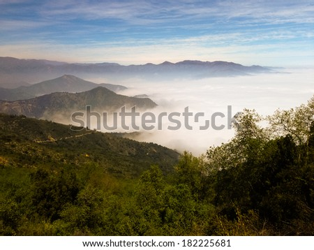 Dense fog in Bosque de Fray Jorge national park/ Bosque Fray Jorge national park (Parque Nacional Bosque Fray Jorge), UNESCO Biosphere reserve in the Limari�­ Province, Coquimbo Region, Chile - stock photo