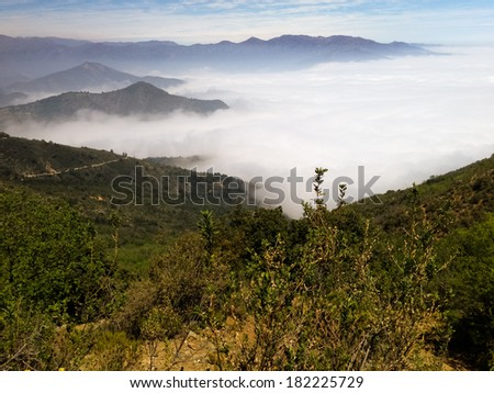 Dense fog in Bosque de Fray Jorge national park/ Bosque Fray Jorge national park (Parque Nacional Bosque Fray Jorge), UNESCO Biosphere reserve in the Limari� Province, Coquimbo Region, Chile - stock photo