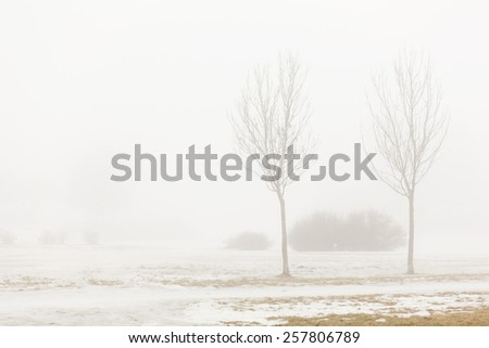 Dense fog in the Park with shrubs and trees of the February winter morning