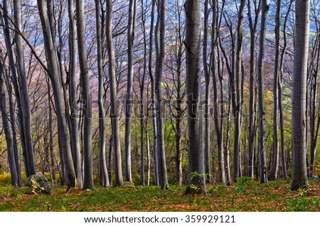 Dense forest at Homolje mountains on a sunny autumn day, east Serbia - stock photo