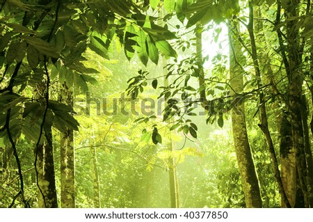 Dense forest. Tropical dense forest with morning sunlight shine on to it. - stock photo