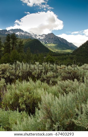 Dense green wild sage in front of an unfolding mountain wilderness in British Columbia, Canada - stock photo