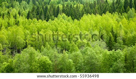 Dense mixed forest panoramic view - stock photo