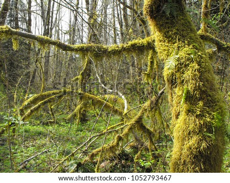 Dense mossy green forests