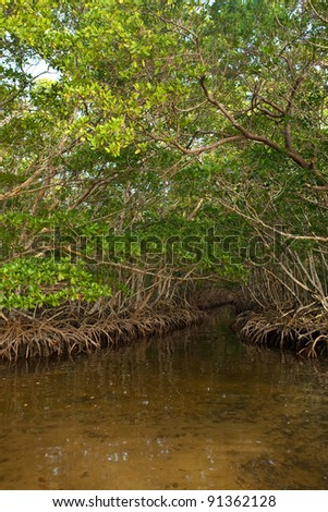 Dense Red Mangrove Tunnel in Caribbean - stock photo