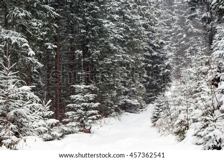 Dense snowy fir forest close in winter. A young fir tree  at the turn of the road. The snow is falling. - stock photo
