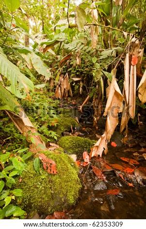 Dense tropical forest in Ecuador. - stock photo