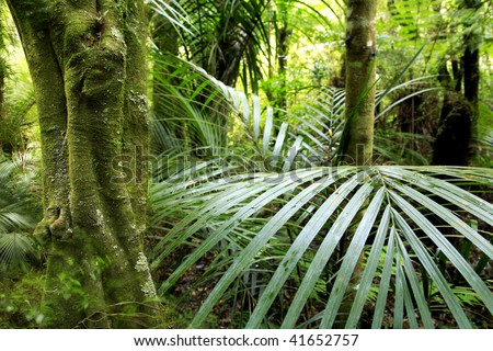 Dense tropical forest in north island of New Zealand. - stock photo