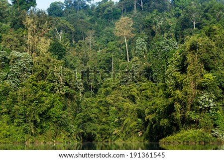 Dense tropical forest in the Chiew Lan Lake, south Thailand