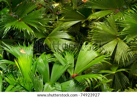 DENSE VEGETATION IN AMAZONIAN BASIN, SOUTH AMERICA  - stock photo