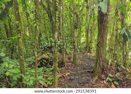 Dense vegetation in rainforest of Costa Rica - stock photo