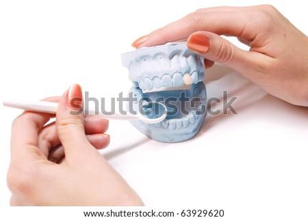 Dentist examing gypsum model of human teeth - stock photo