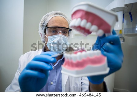 Dentist holding and examining a mouth model in dental clinic