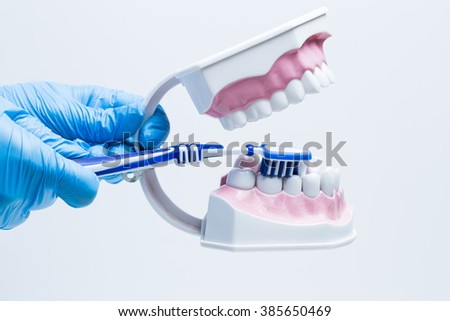 Dentist in gloves working with jaw model  - stock photo