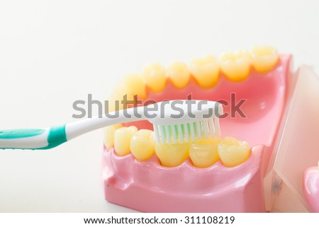 Denture shows how to use toothbrush, dental equipment - stock photo