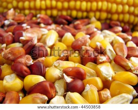 Deposit of corn - stock photo