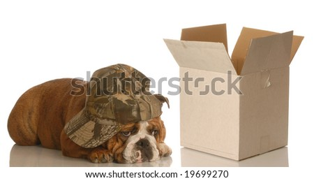 depressed dog lying beside empty box - concept for moving, packing, shipping - stock photo