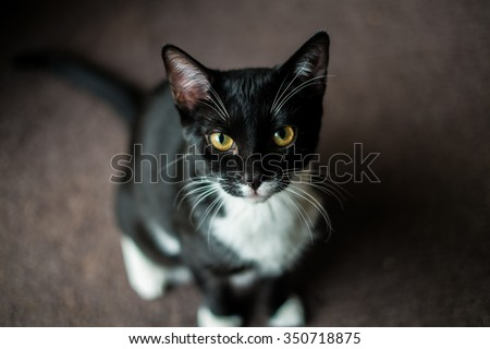 Depth of field photo of cat