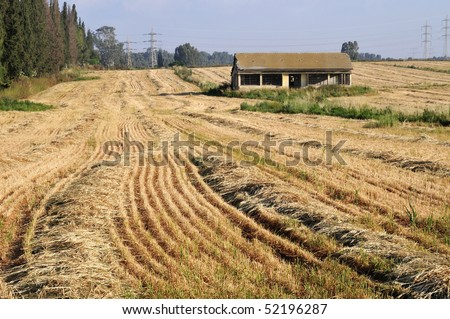 derelict house in field after harvest  wheats - stock photo