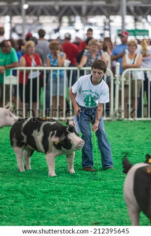 DES MOINES, IA /USA - AUGUST 10: Unidentified teen exercising and showing swine at Iowa State Fair on August 10, 2014 in Des Moines, Iowa, USA. - stock photo
