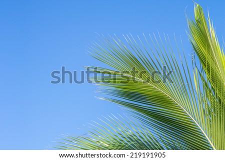 Description:  Palm leaves against a blue sky background. Title:  Palms. - stock photo