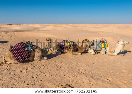 Desert activities in Douz, Kebili, Tunisia