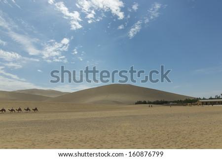 Desert camel - stock photo
