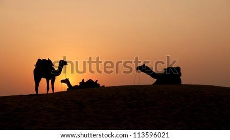 Desert, Camel Ride, - stock photo
