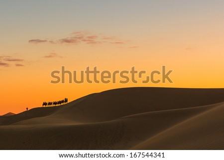 Desert, Camel Ride - stock photo