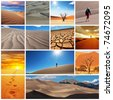 desert collage - stock photo