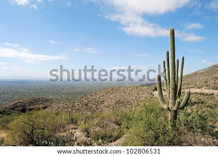 Desert east of Tucson, Arizona / Land Without End
