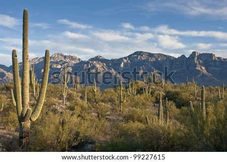 Desert Evening in Tucson Arizona - stock photo