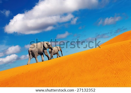 Desert fantasy, elephants walking - stock photo