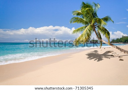 Desert island with palm tree on the beach - stock photo