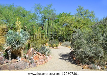 Desert landscape in Phoenix Arizona USA - stock photo