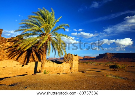 Desert landscape in sunset light - stock photo