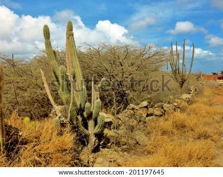 Desert landscape  on the island of Aruba