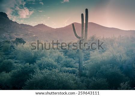 Desert landscape - rain falling - Phoenix, Arizona,USA - stock photo