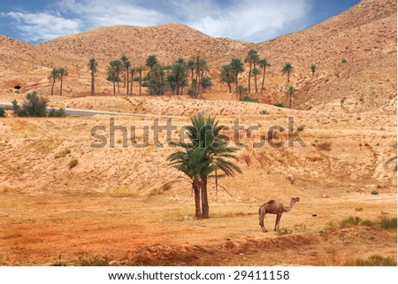 desert landscape with a camel - stock photo