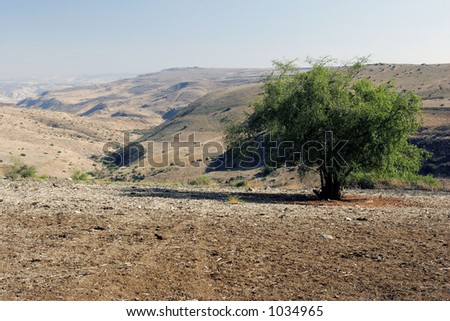 Desert landscape with a tree (Galilee, Israel)