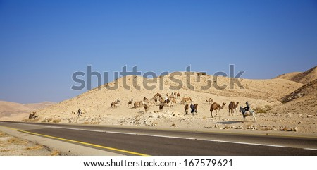 Desert landscape with Camel crossing highway and blue sky with clouds in Negev desert. Israel. - stock photo