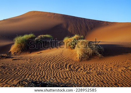 desert landscape with clumps of dry grass in the background sand dune in Namibia - stock photo