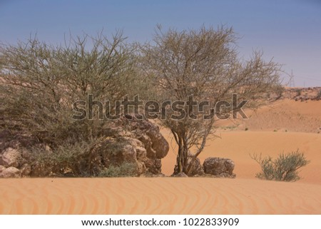 Desert landscape with desert flora, trees and plants, rock outcrops and shifting sand dunes showing wind erosion, under blue skies in the Arabian desert of the UAE near Meliha near Dubai.